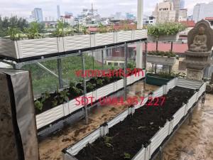 Vườn rau sạch anh Khoa Liễu Giai