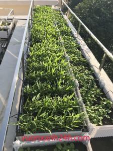 Vườn rau sạch – chậu thông minh cao cấp