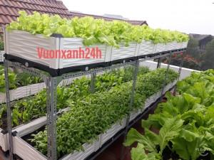 Giàn trồng rau chậu ghép thông minh  cao cấp