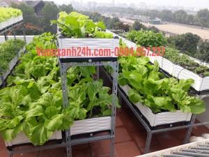 Giàn trồng rau bậc thang cao cấp