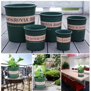 Chậu trồng hoa monrovia siêu rẻ
