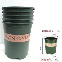 monrovia số 5
