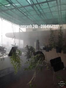 Hệ thống tưới phun sương cho lan