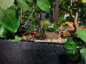 Hệ thống tưới phun mưa tự động cho cây cảnh