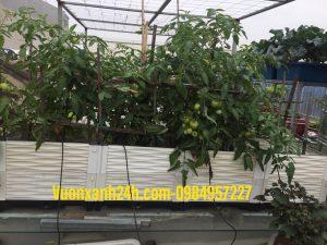 Chậu ghép thông minh trồng cây , hoa , rau ( 2mx50x40cm )