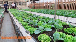 Tất tần tật bí quyết trồng rau trên sân thượng ăn mãi không hết