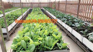 Vườn rau sạch gần 200 chậu tại 37 Nguyễn Xiển