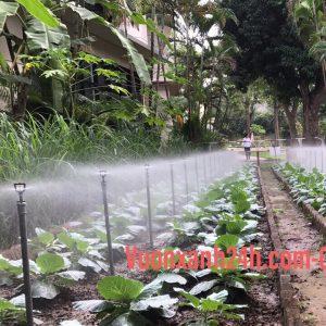 Hệ thống tưới phun mưa tự động cho rau trong vườn