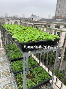 Kệ trồng rau 2 tầng ( 10 chậu to 68x43cm )