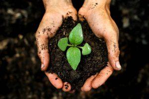 Đất sạch trồng cây -đất vi sinh- đất phù sa sạch