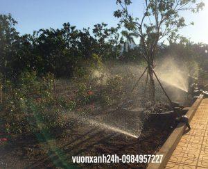 Hệ thống tưới phun mưa sử dụng đầu phun chỉnh góc cho vườn cây 2000 mét vuông tại Xuân Mai, Hòa Bình